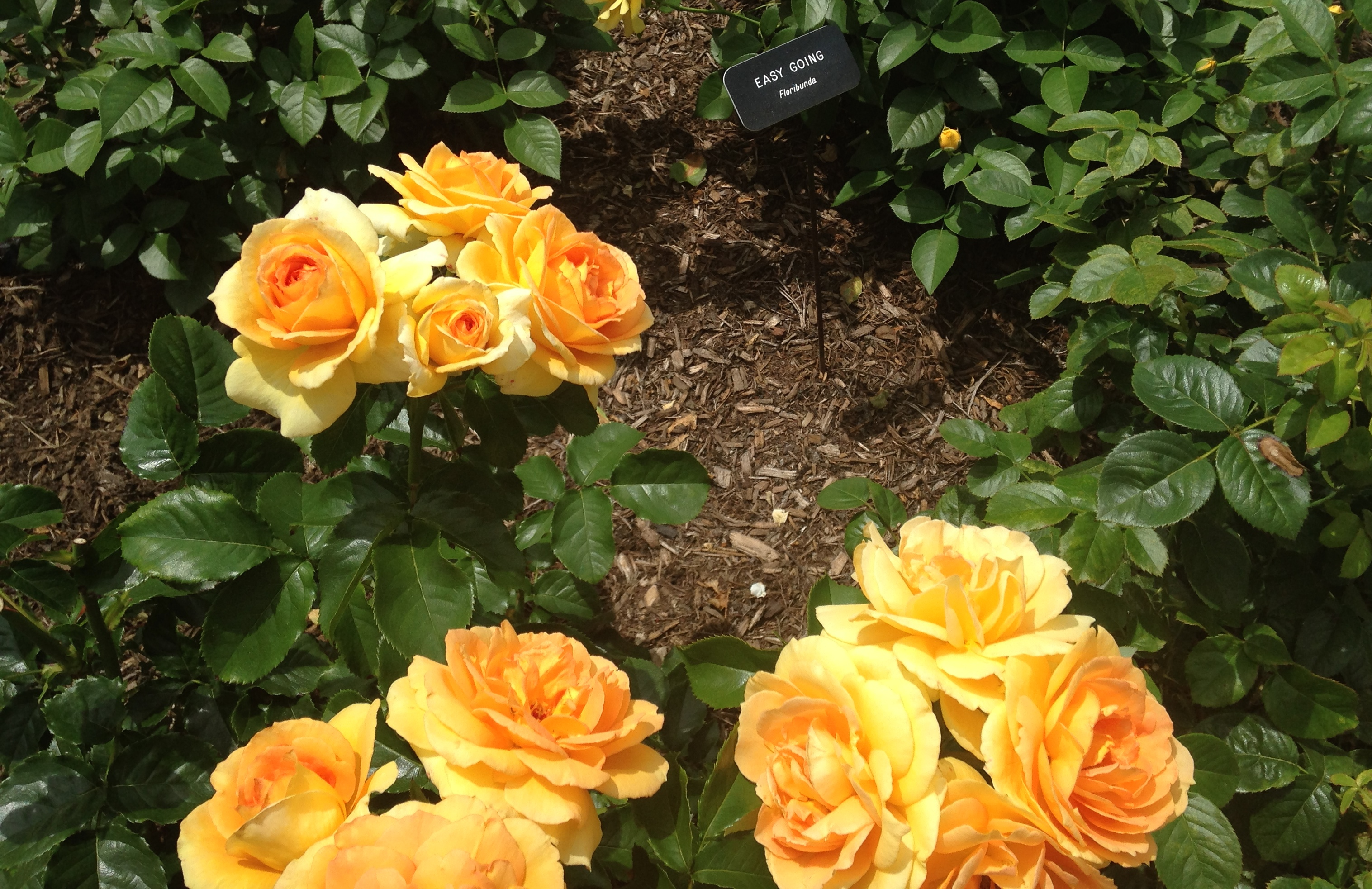 I Beg Your Pardon....Have You Seen This Gorgeous Rose Garden? Visit ...