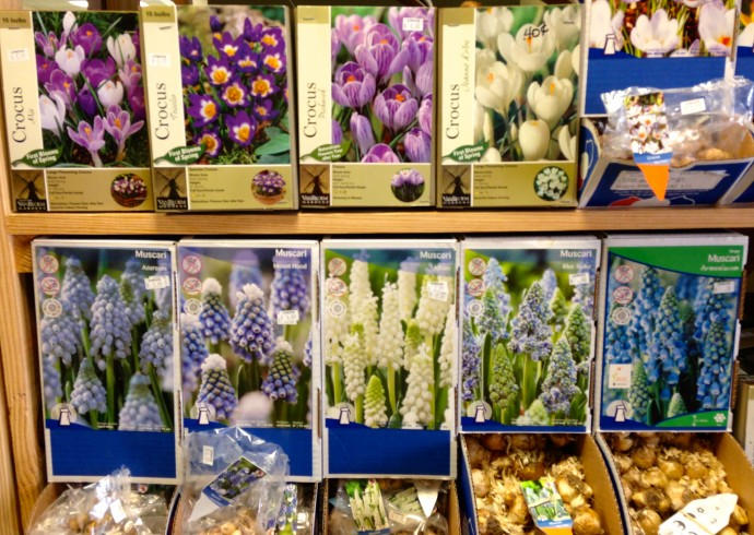 New kdhamptons garden diary time to plant beautiful bulbs kdhamptons for Lynch s garden center