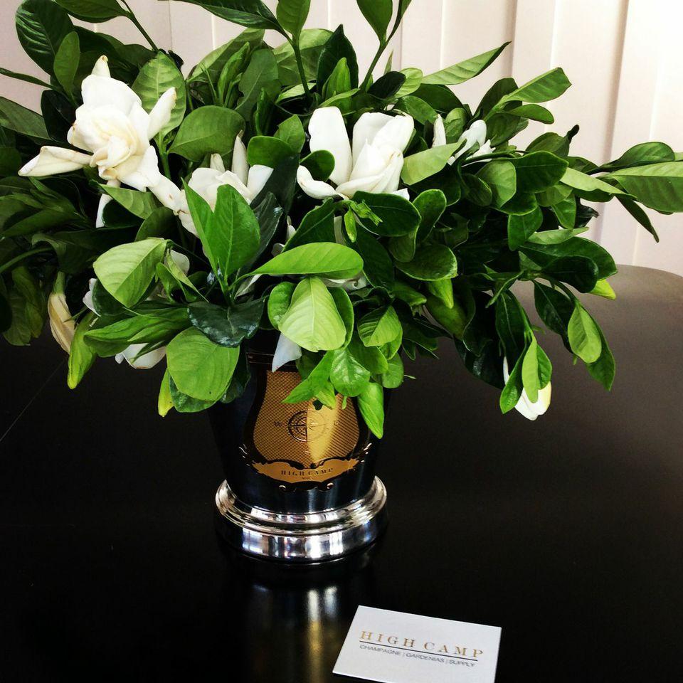 new kdhamptons design diary gardenia gurus susan hanson