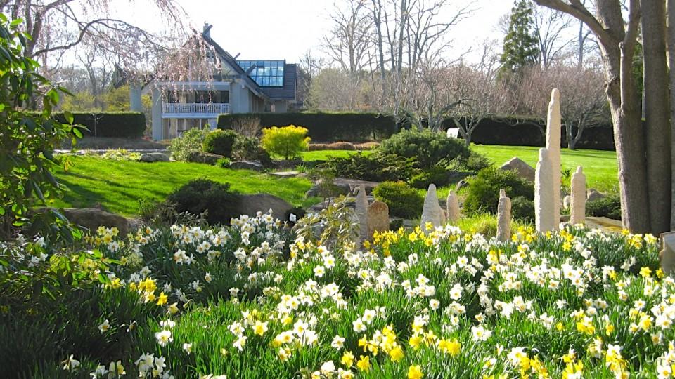 Atsuya Tominaga's Ninguen among Daffodils in bloom js 008 (4)