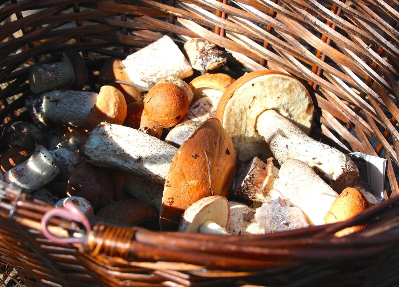 mushrooms, the hills