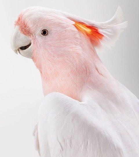 bird-portraits-leila-jeffreys-03