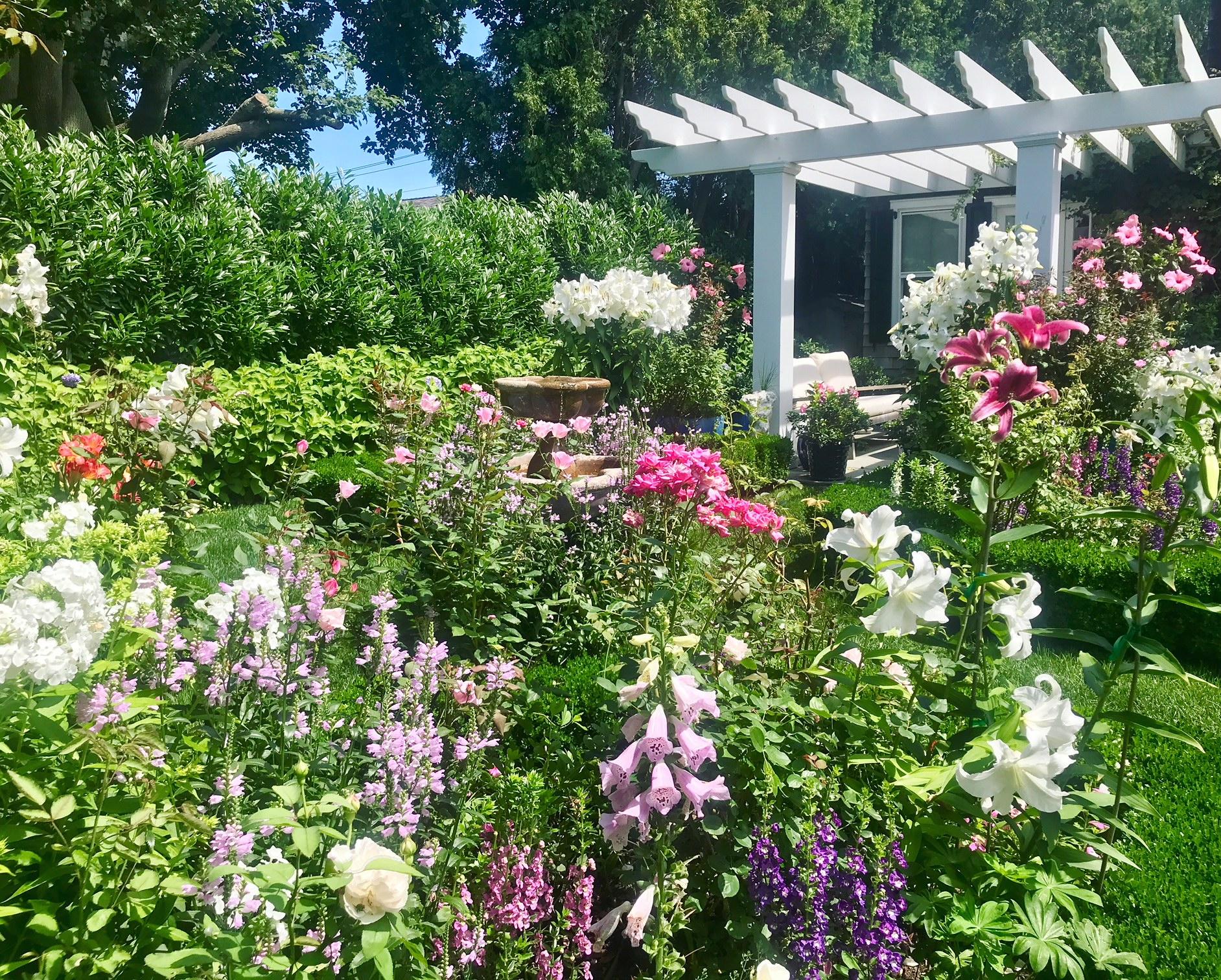 Pruning Roses 8 Easy Steps For Healthy Spring Rose Bushes